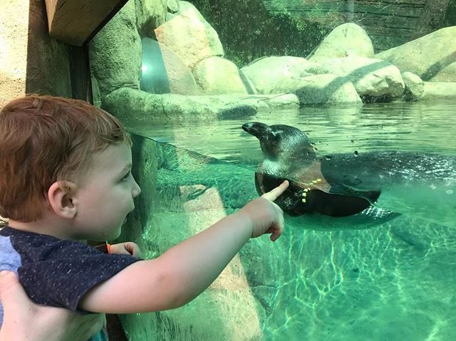 https://www.littlerock.com/images/default-source/blogs/little-rock-zoo-a-boy-and-his-penguin-640x480.jpg?sfvrsn=c179cb6_0