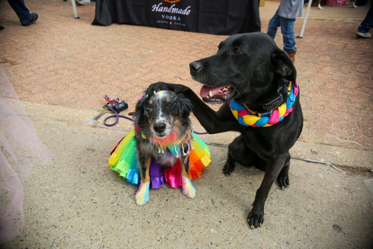https://www.littlerock.com/images/default-source/blogs/pride-fest-2019_2020-09-04_pooches_v1_750x500.jpg?sfvrsn=65c06eb7_2