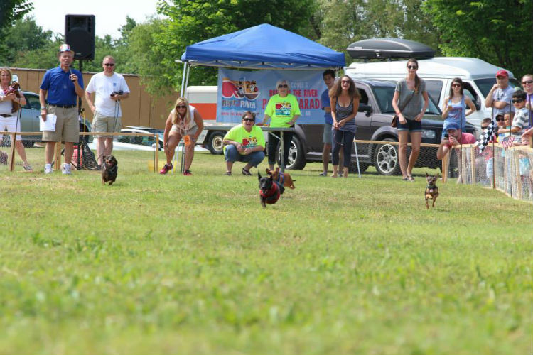 Springfest-dog races