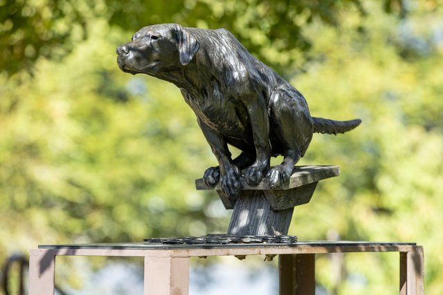 A sculpture of a dog, crouched on the end of a dock, ready to spring into the water to retrieve something.