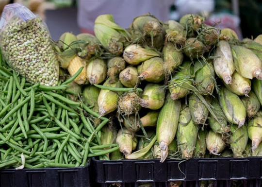 Farmers Market-corn and green beans-560x400