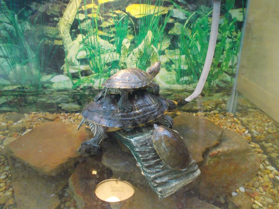 Talkin' Turtle